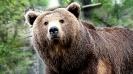 Краткое описание медведя на английском языке с переводом