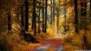 Краткое описание леса на английском языке