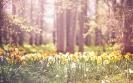 Краткое описание весны на английском языке